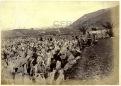 Cultivo de la cochinilla entre nopales en Tenerife