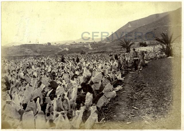 Nopales para el cultivo de la cochinilla en Tenerife, Islas Canarias