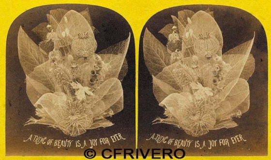 Estereoscopia de un conjunto de skeleton leaves. William. Albúmina London 1862