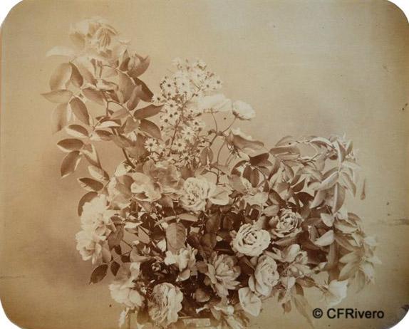 Braun, Adolph (1812-1877) Alsacia. Composición floral. Albúmina. Ca. 1857