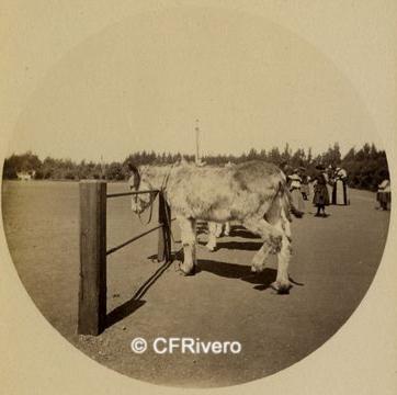 Autor desconocido- Revelado Kodak. Golden Gate Park (San Francisco- EEUU). Gelatinobromuro. Ca. 1890