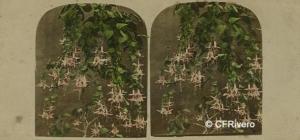 Autor desconocido (Reino Unido). Composición floral. Cartulina estereoscópica, albúmina iluminada. Ca. 1857