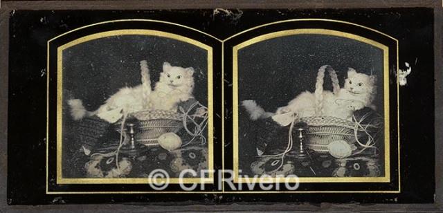 Louis Jules Duboscq. Gatito de peluche en un cesto. Daguerrotipo estereoscópico. 1851/55.