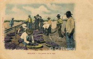 Málaga, un pasero de la vega. Tarjeta postal