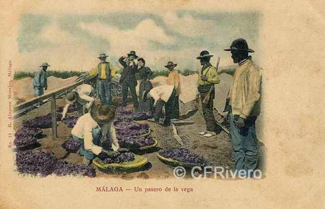 Málaga, un pasero de la vega. Tarjeta postal editada por Álvarez Morales