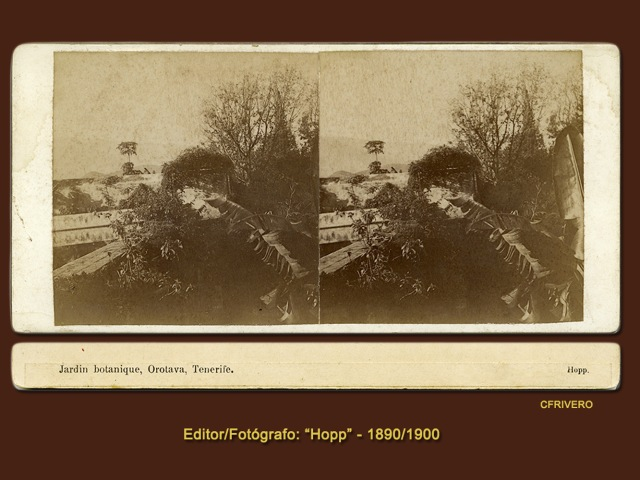Hopp Ferenc. Jardin botánique, Orotava. Tenerife. Estereoscopia en gelatina de plata. Ca. 1900 (CFRivero)