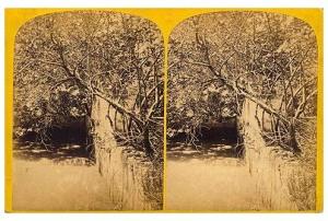 246. Frank Good. Moorish Aqueduct. Estereoscopia en albúmina. 1869