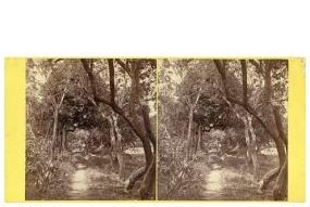 308. Frank Good. La Avenida del Califa. Estereoscopia en albúmina. 1869