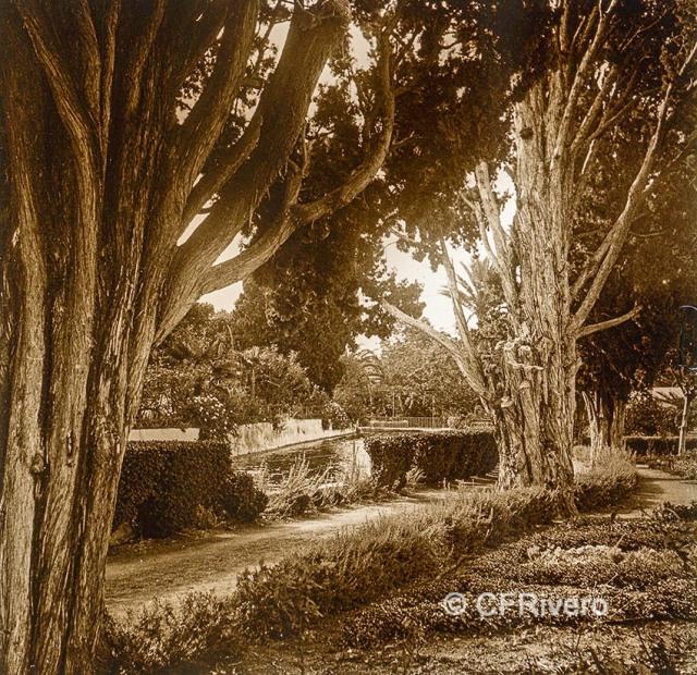 Jacinto Ruiz del Portal. Retiro, bordes del Estanque [Churriana, Málaga]. 1925. Par de una estereoscopia positiva en vidrio 45x110 mm. (CFRivero)