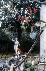 Fig. 16: Juan Antonio Fernández Rivero. Málaga, el Retiro, estatua de Hebe junto a la Ría. 1986 (CFRivero)